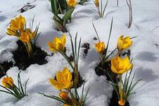Притча о Весне